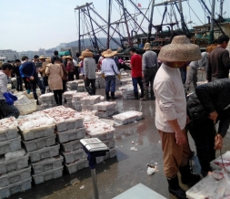 水产交易市场用冰